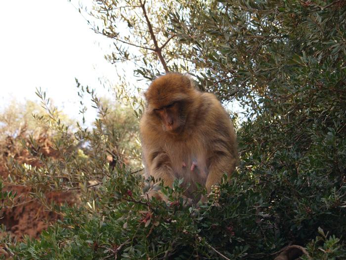 Voyages Naturalistes Au Maroc 2008 2011 Page 3