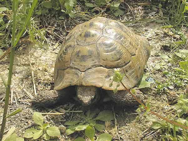 Las 2 de tierra son la tortuga