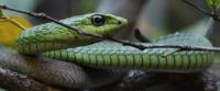 accès au site batraciens et reptiles du monde