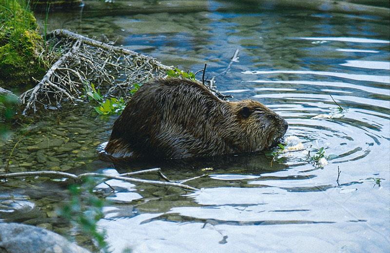 сути, фото животных водоемов база работает